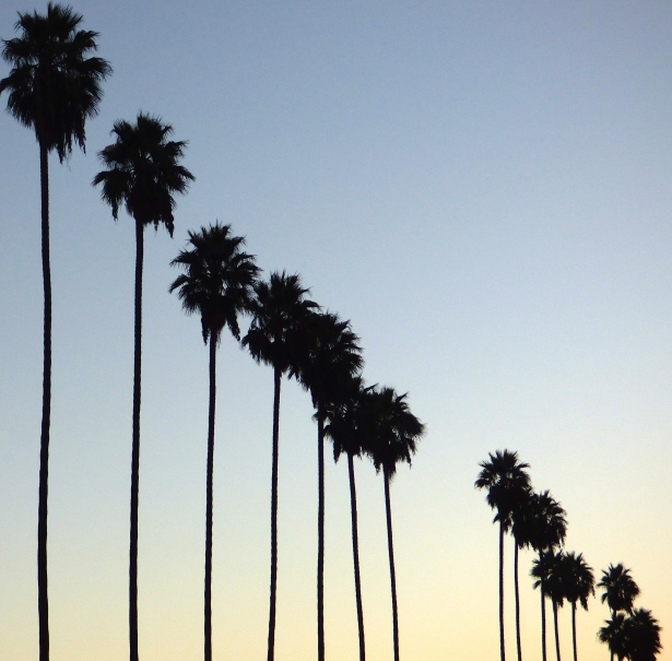 Silverlake Palm Trees